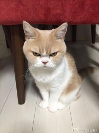 Grumpy's Photo